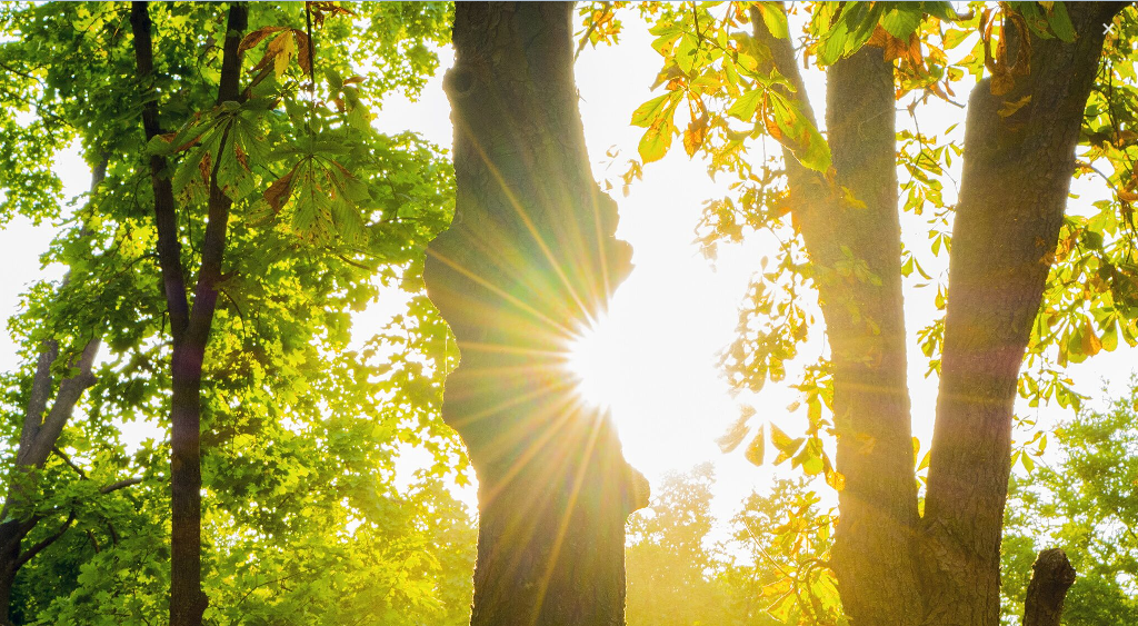 2016_banner_photo_light_trees_large.png