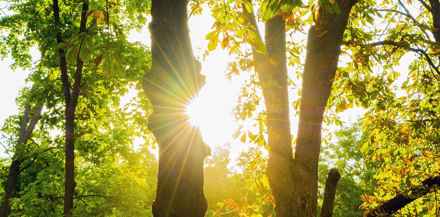 banner-light-through-trees6.jpg