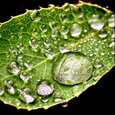 spiritus-leaf-water.png
