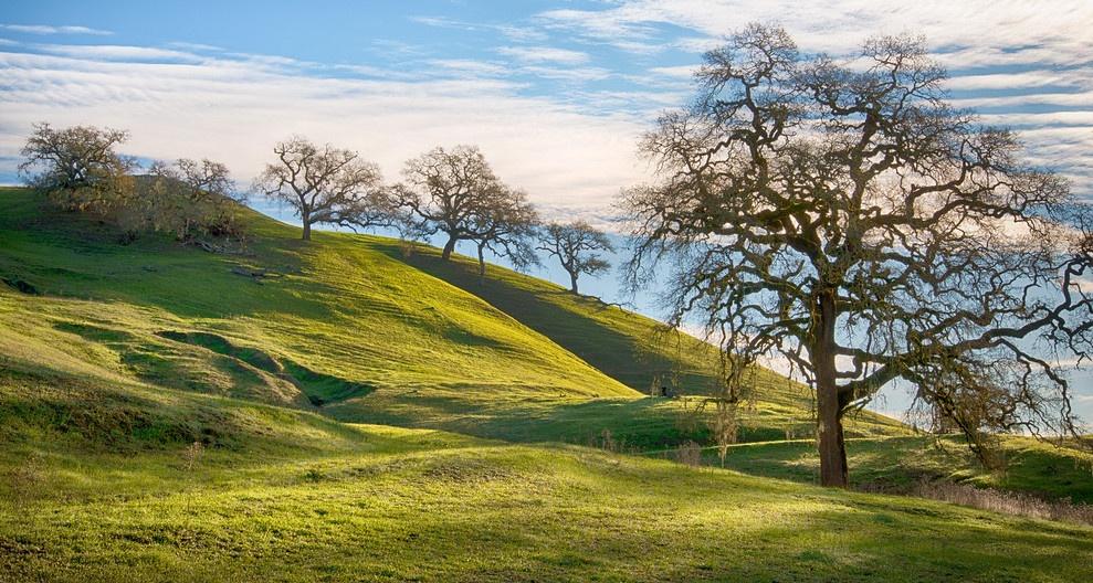 drew green hills xtra large cropped.jpg