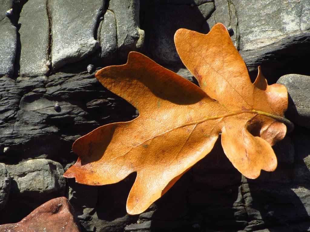 pc leaf.jpg